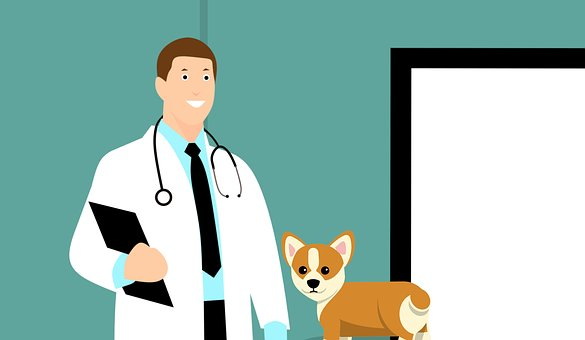 Being A Vet: Top 3 Things You Should Know